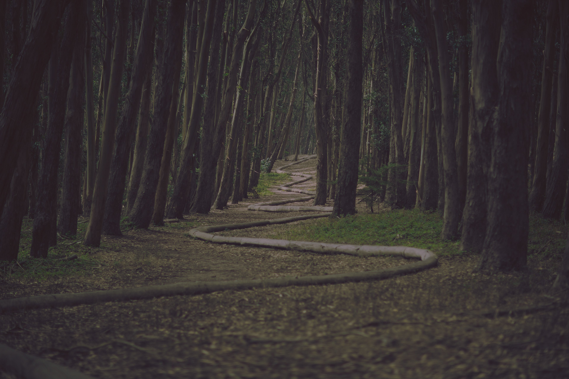backround forest leadon university